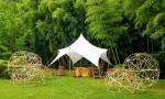 Jardinier Paysagiste Bambou