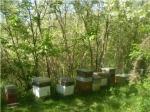 Producteur de miels