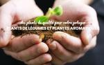 Vente en ligne de plants potager et aromatique